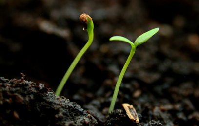 New Life: A Seedling