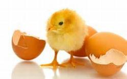 Chicken and Eggshells : What Just Happened to Me?