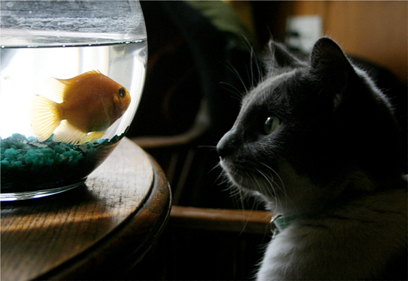 Salvation: Why Do I Need to Be Saved? Cat and Goldfish