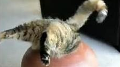 Cat Stuck in a Jar : You Need Someone to Save You!